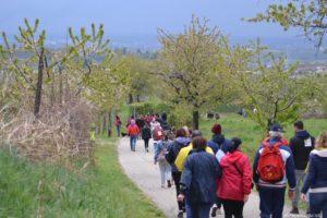 Camminata tra i ciliegi